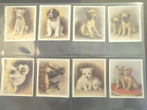 1936-OUR-PUPPIES-dog-puppy-dogs-Godfrey-Phillips-Tobacco-Card-Set-of-30-cards
