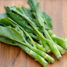 1//2-OZ GAILAN Gai Lan seeds; Chinese Broccoli Dark Green Glossy Kale 特油芥蘭 3600