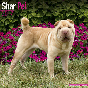 Calendario 2017 Shar Pei Sharpei Cinese Cane Grinza Dog Da Parete | eBay
