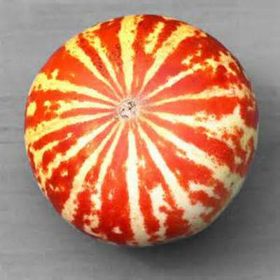 Rare Tigger Melon! THE MOST BEAUTIFUL DELICIOUS MELON YOU WILL EVER GROW!