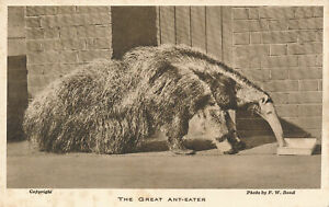 PC60002 The Great Anteater. F. W. Bond
