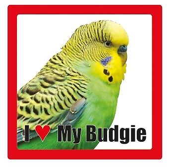 budgy ceramic square coaster * poisson canaries poules I love my *.. lapin lapins