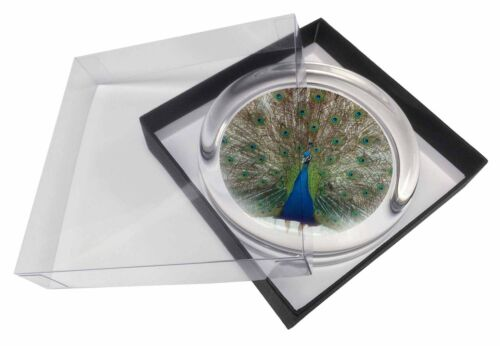 Rainbow Feathers Peacock Glass Paperweight in Gift Box Christmas Pres AB-PE13PW