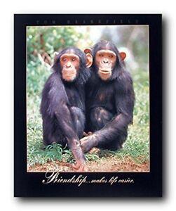 Removable Art Decor Animal Vinyl Decal ne28 Chimpanzee Animal Wall Decal