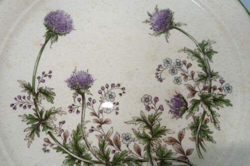 Assiette Arklow thistleklow Thistledown Honey Stone GREEN-Digestif Assiette