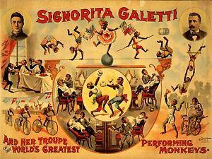 ART-PRINT-POSTER-ADVERT-CIRCUS-SIGNORITA-GALETTI-PERFORMING-MONKEYS-NOFL1588