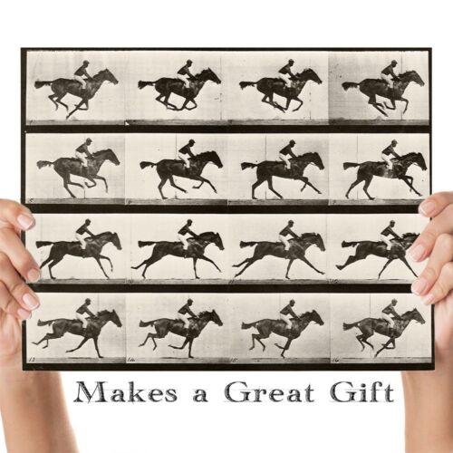 Perfect 11x14 Unframed Print 1887 Muybridge/'s Horse Galloping Vintage Print