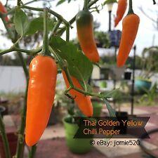RARE✿ Thai Golden Yellow Hot Chilli Pepper 15 Seeds ●Beautiful Fruit