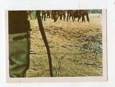 figurina - SANDOKAN ALLA RISCOSSA BOY 1976 - numero 247