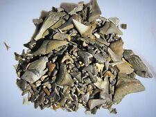 50 fossil shark teeth per lot.