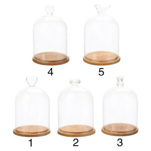 Gl Display Cloche Bell Jar Dome Rose