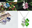Collana-Donna-Quadrifoglio-Cristallo-Charms-Swarovski-Portafortuna-Regalo-Top miniatura 3