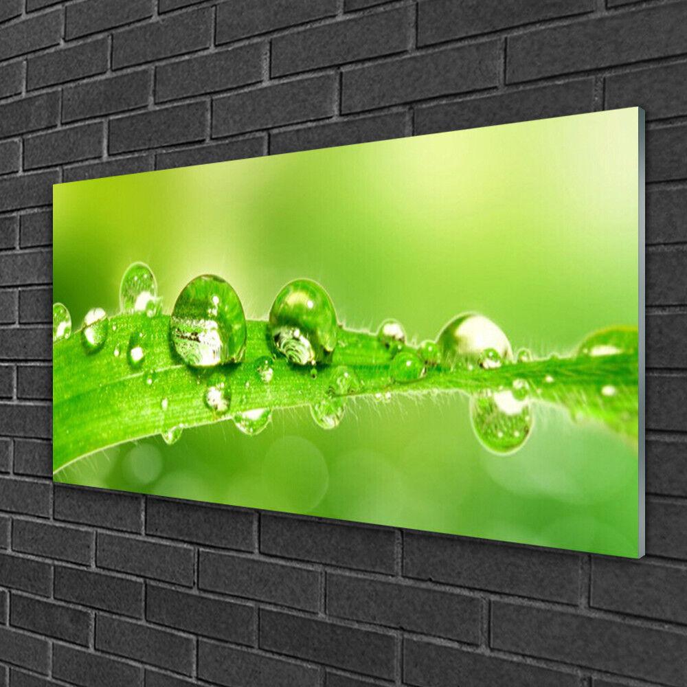 Tableau sur verre Image Impression 100x50 Floral Gouttes De Rosée Feuille