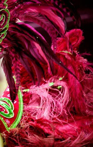 """9-13/"""" Bourgogne autruche petit Wholesale Plumes Mariage Halloween 200 plumes"""