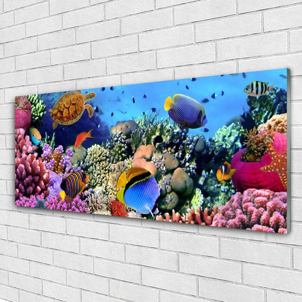 Impression sur verre Image tableaux 125x50 Nature Récif De Corail