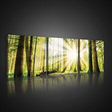 SET (3 teilig) CANVAS Leinwandbild Wandbild WALD NATUR BAUM SONNEN 3FX10143S13
