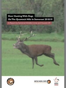 Deer-Hunting-With-Dogs-On-The-Quantock-Hills-In-Somerset-2018-19