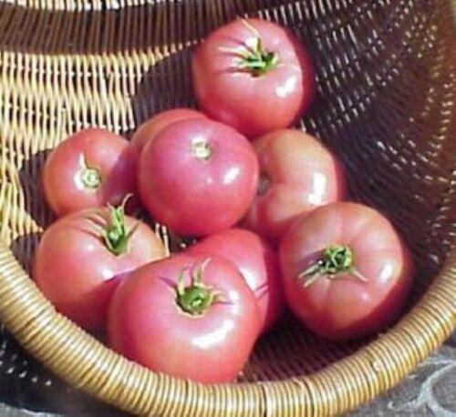 Jandl reliquia ensalada de tamaño mediano Semillas tomate Orgánico 20 Bola púrpura Eva