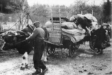 WW2 - Corcieux - Vosges - Retour des réfugiés dans leur village en sept 1944
