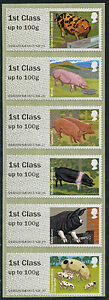 NCR-TYPE-IIA-PIGS-STRIP-OF-6-x-1st-CLASS-VALUES-POST-GO-FASTSTAMPS