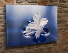 Box Canvas Art Print  White Flower on Blue Water Background 18x24  Giclee GO7
