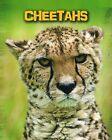 Cheetahs by Charlotte Guillain (Paperback, 2015)