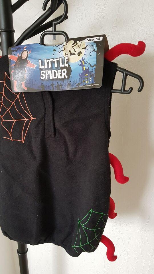 Halloween little spider