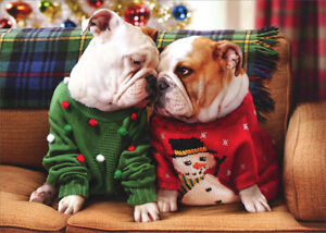 Christmas Bulldogs In Sweaters Pop Up Stand Out Dog Christmas Card ...