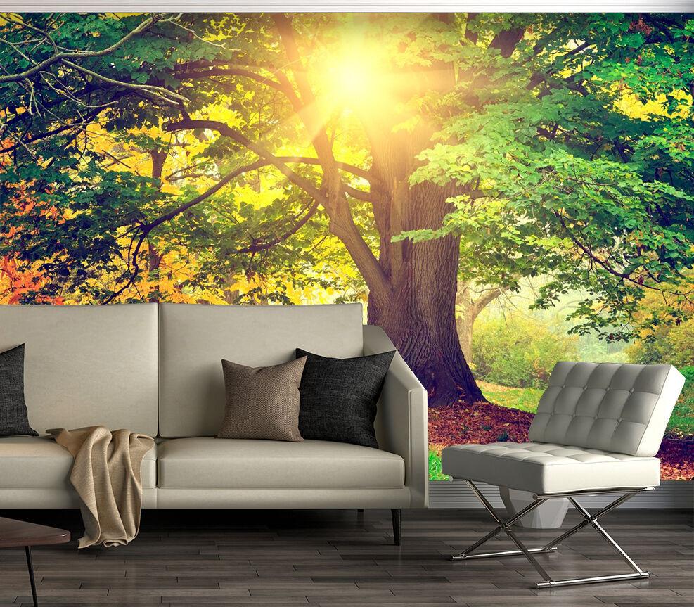 3D outdoor Big tree sun Wall Paper wall Print Print Print Decal Wall Deco Indoor wall Mural b0cb2d