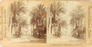 Francia Cannes Hotel Grigio E Di Albion, Foto Stereo Vintage Albumina PL62L3