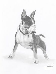 ENGLISH BULL TERRIER Dog Limited Edit Art Drawing Print Signed - Bull terrier art