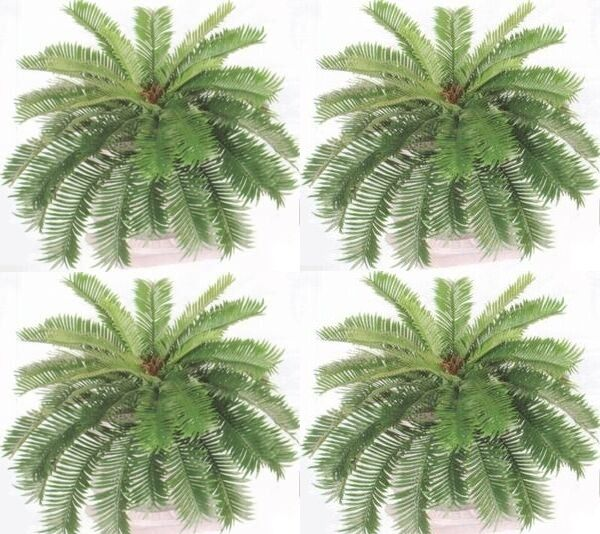 Four 27 inch Long 35 Fronds 36 inch Spread Artificial Silk Sago Ferns Cycas Palm
