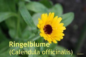 ***Calendula Ringelblumen - Extrakt, 250ml, für gereizte u. unreine Haut