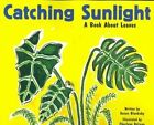 Catching Sunlight: A Book About Leaves by Susan Blackaby (Paperback, 2003)