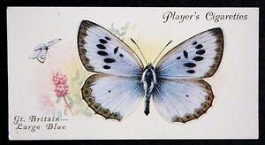 Large-Blue-Rare-British-Butterfly-Superb-Vintage-Colour-Card-VGC