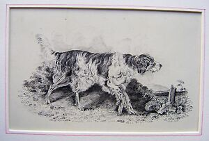 LATHBURY-FAMILY-2-DOGS-A-POINTER-IN-A-LANDSCAPE-INK-S-L-1829