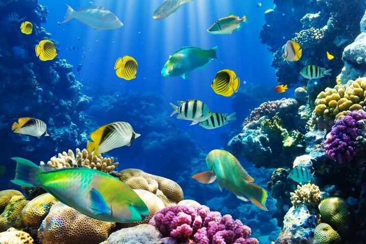 3D Seabed Fish bluee Paper Wall Print Wall Decal Wall Deco Indoor Wall Murals