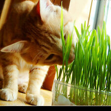 HARVESTED Cat Grass 1oz/approx800 Seeds Organic Including Growing Guide