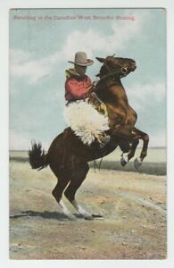 [70518] OLD POSTCARD RANCHING in the CANADIAN WEST, BRONCHO BUSTING