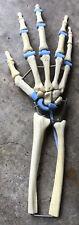 Dow Corning Human Hand Wrist Joint Model Anatomy Skeleton Display Medical