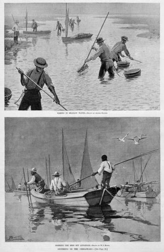 OYSTERING ON THE CHESAPEAKE RAKING OYSTERS IN SHALLOW WATER OYSTER BEDS BOATS