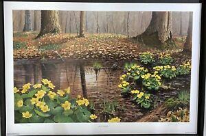 1996 Wildflower Association Of Michigan MARSH MARIGOLDS  Art Print signed!