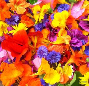 essbare-Blueten-Blumen-fuer-Salat-Kuchen-Eis-Blumensamen-200-Samen-als-Mischung