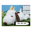 Japan SEGA SNOOPY mega jumbo good friends Nesoberi stuffed plush Winter Ver