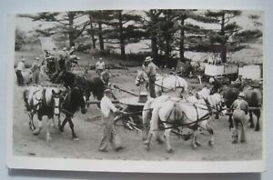 5-Teams-of-Horses-Running-Threshing-Machine-Vintage-Real-Photo-Postcard-No-ID