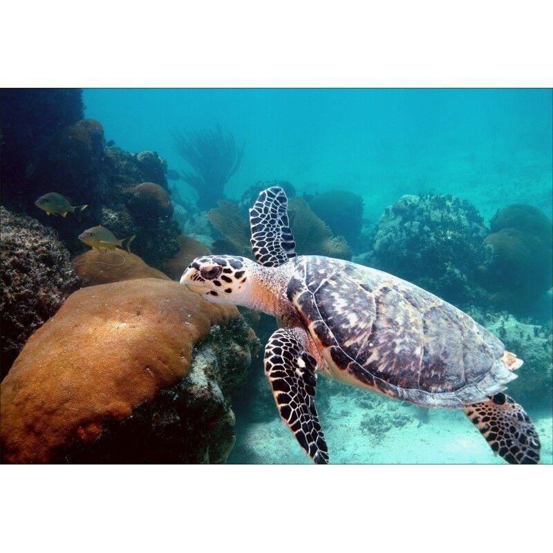 Stickers déco muraux déco Stickers : tortue de mer 1491 e075a9