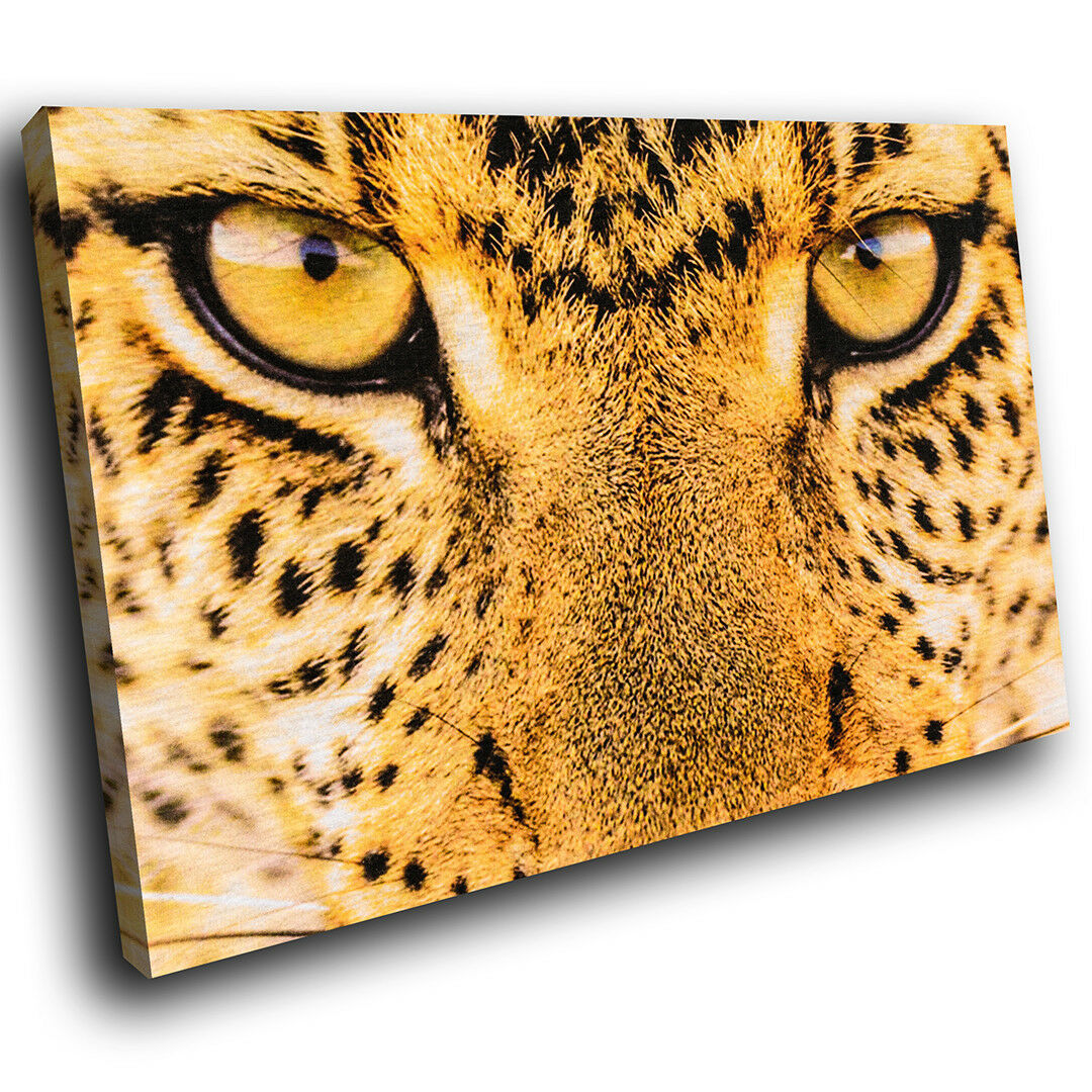 A415 Golden Leopard Cat Eye  Funky Animal Canvas Wall Art Large Picture Prints