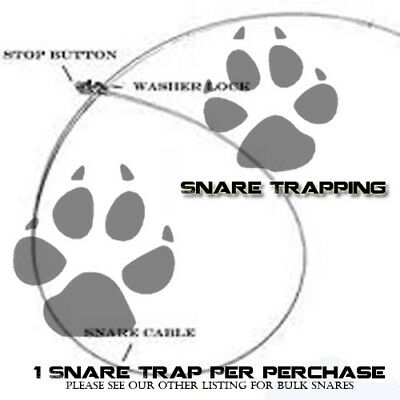fur trapping. trapping 7 foot 1//16 in bobcat snare animal control traps