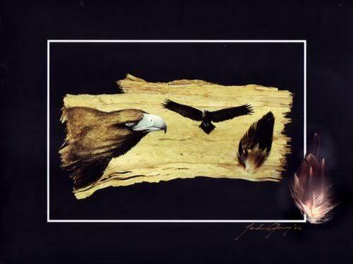 WEDGED TAIL EAGLE (Flight)  PRINT SIGNED BY ARTIST  REAL FEATHERS  Bark Art