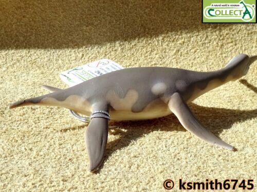 CollectA Dolichorhynchops Juguete Animal Mar prehistórico Dinosaurio Nessy nuevo